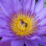 Sony QX100 Sample Images [Lens Camera]