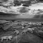 Wildlife Photographer of the Year 2014 Winners Announced