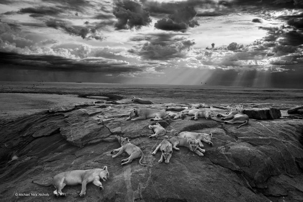 michael-nick-nichols-wildlife-photographer-of-the-year-2014