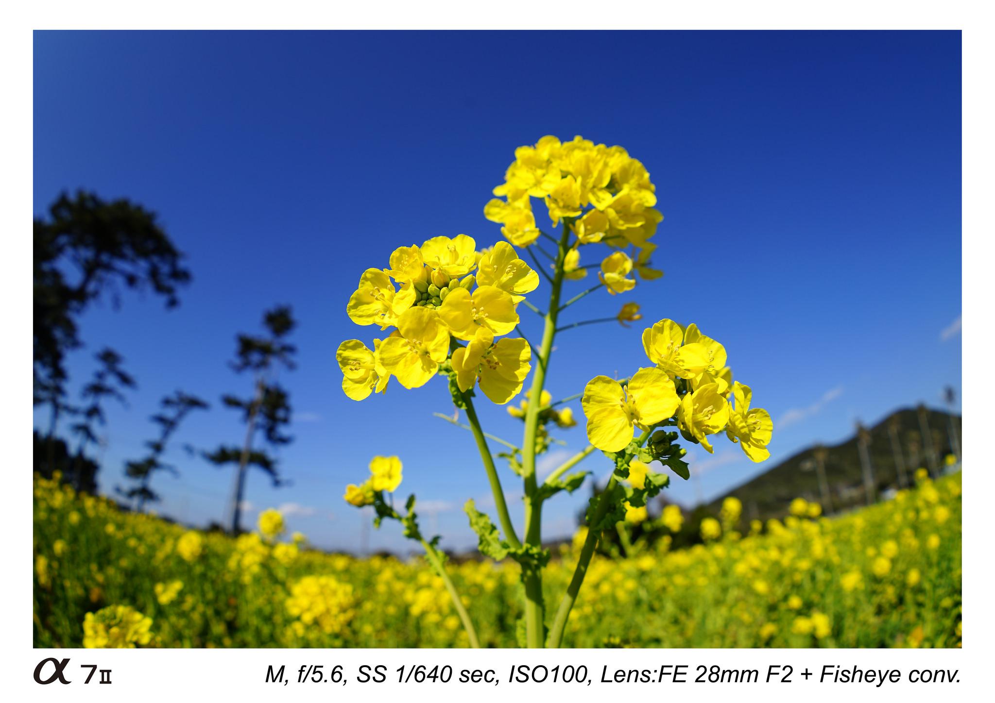 sony-fe-28mm-f2-lens-sample-images-03