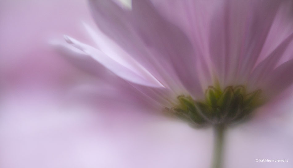 lensbaby-velvet-56mm-f-1.6-lens-sample-images-1